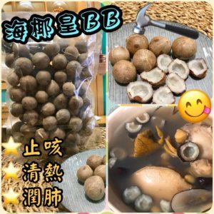 正宗非洲海椰皇BB(1斤)